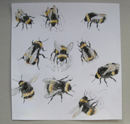 bee drawings 1