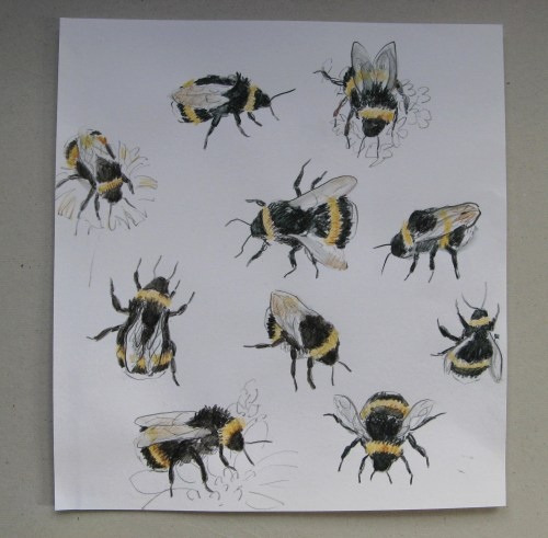 bee drawings 2