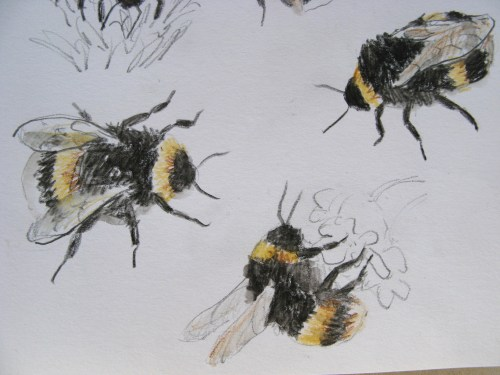 bee drawings 5