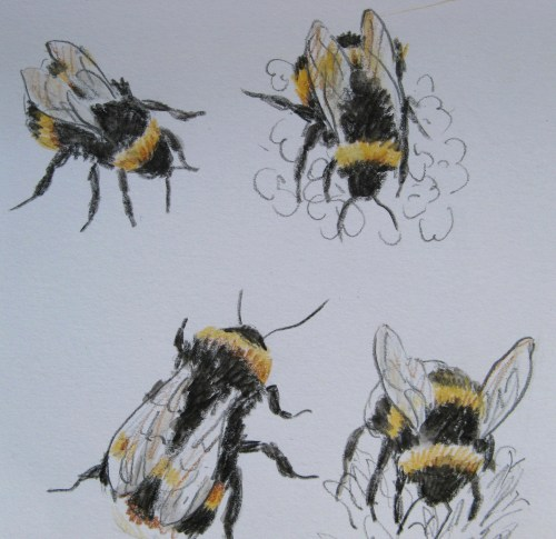 bee drawings 6