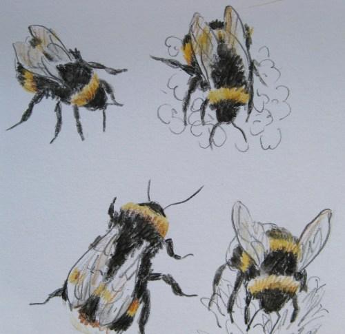 bee drawings 6