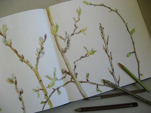 spring buds 2