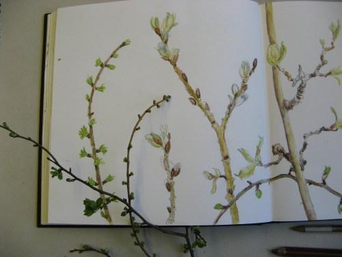 spring buds 3