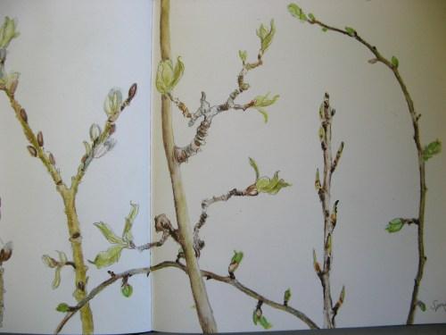 spring buds 4