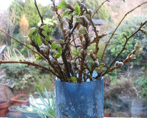 spring buds 6