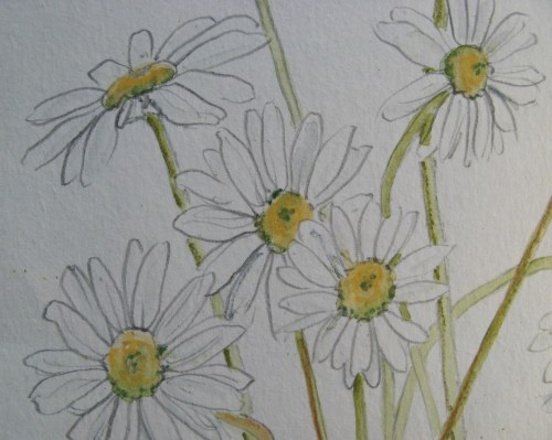 daisy embroideries 3