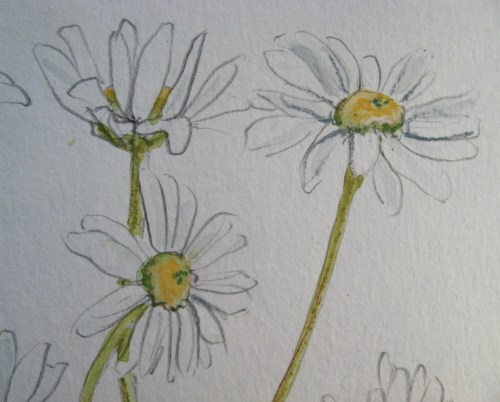 daisy embroideries 4