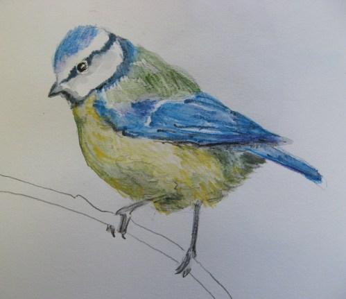 sketchbook birds 10