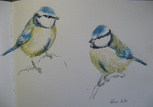 sketchbook birds 11