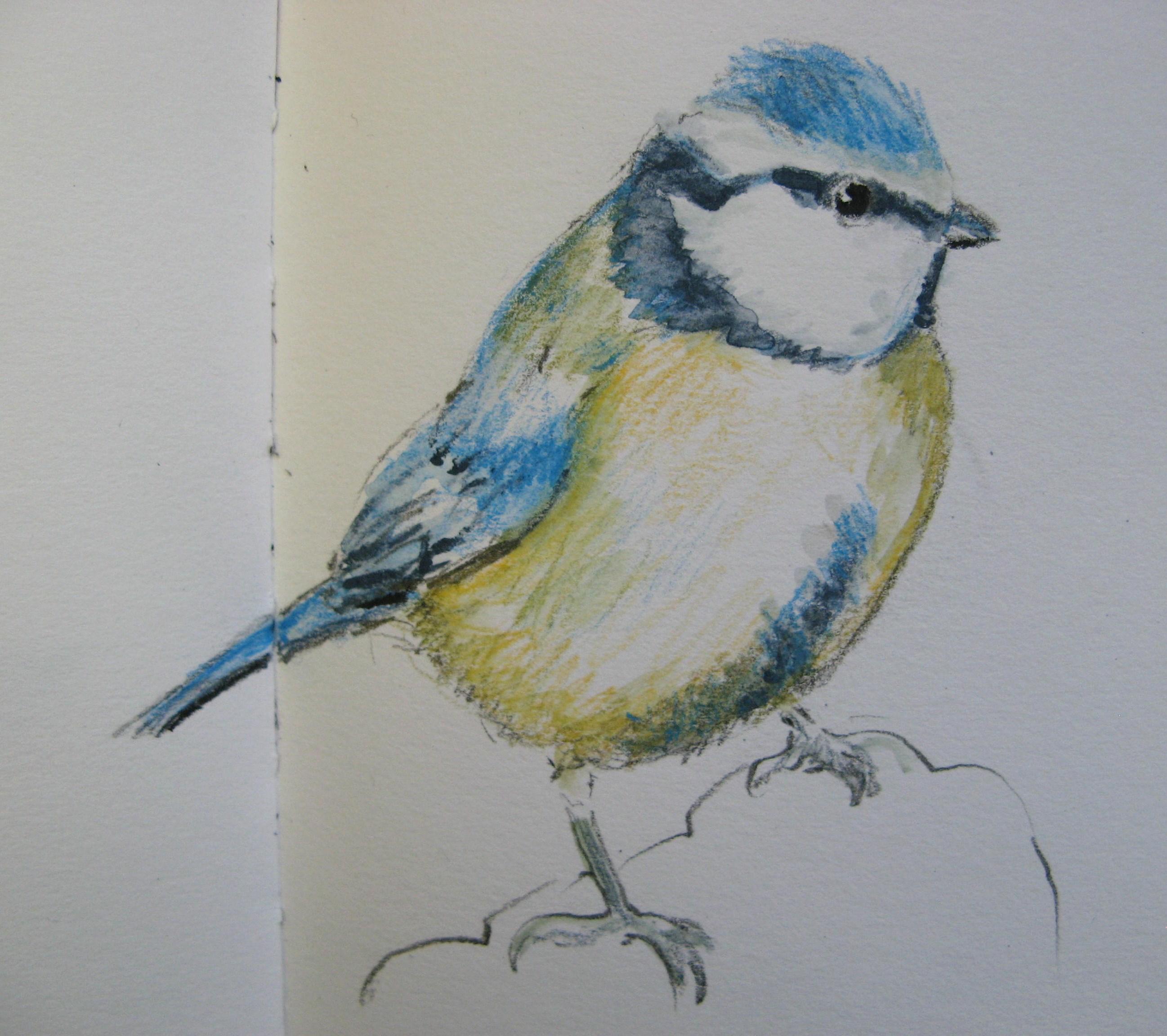 bird drawings | agnesandcora