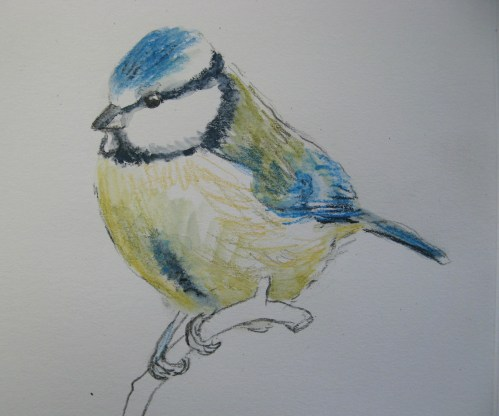 sketchbook birds 13