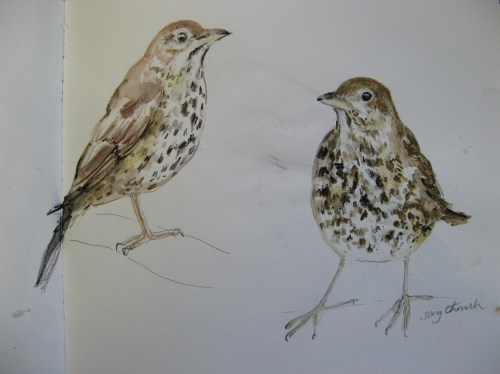 sketchbook birds 3