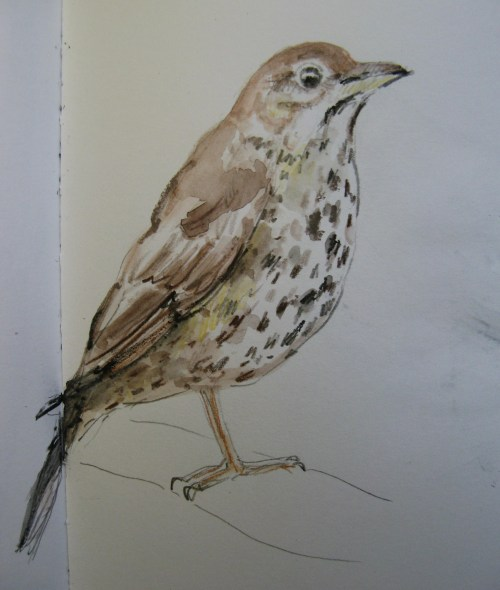sketchbook birds 5