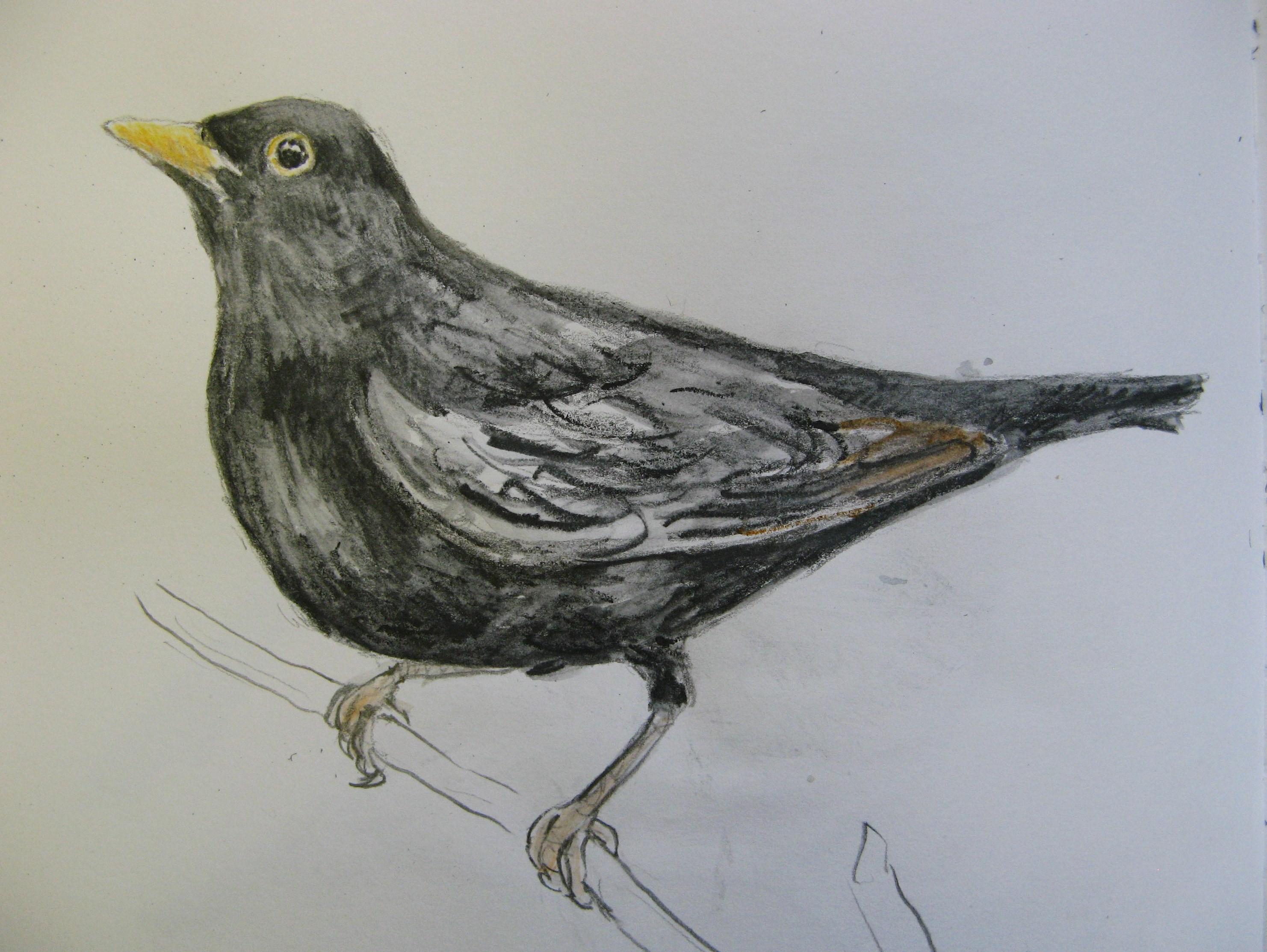 Vintage Sparrow Drawings