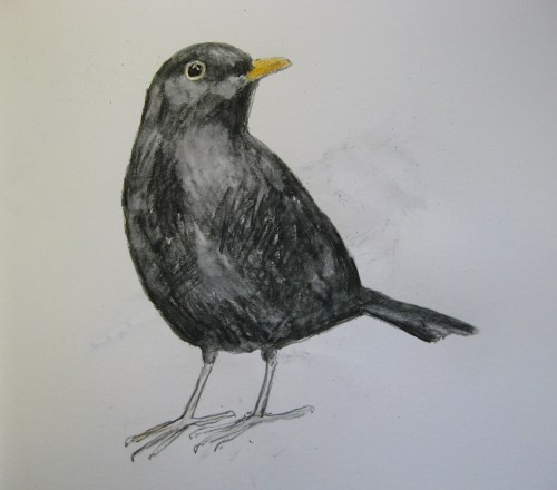 sketchbook birds 9