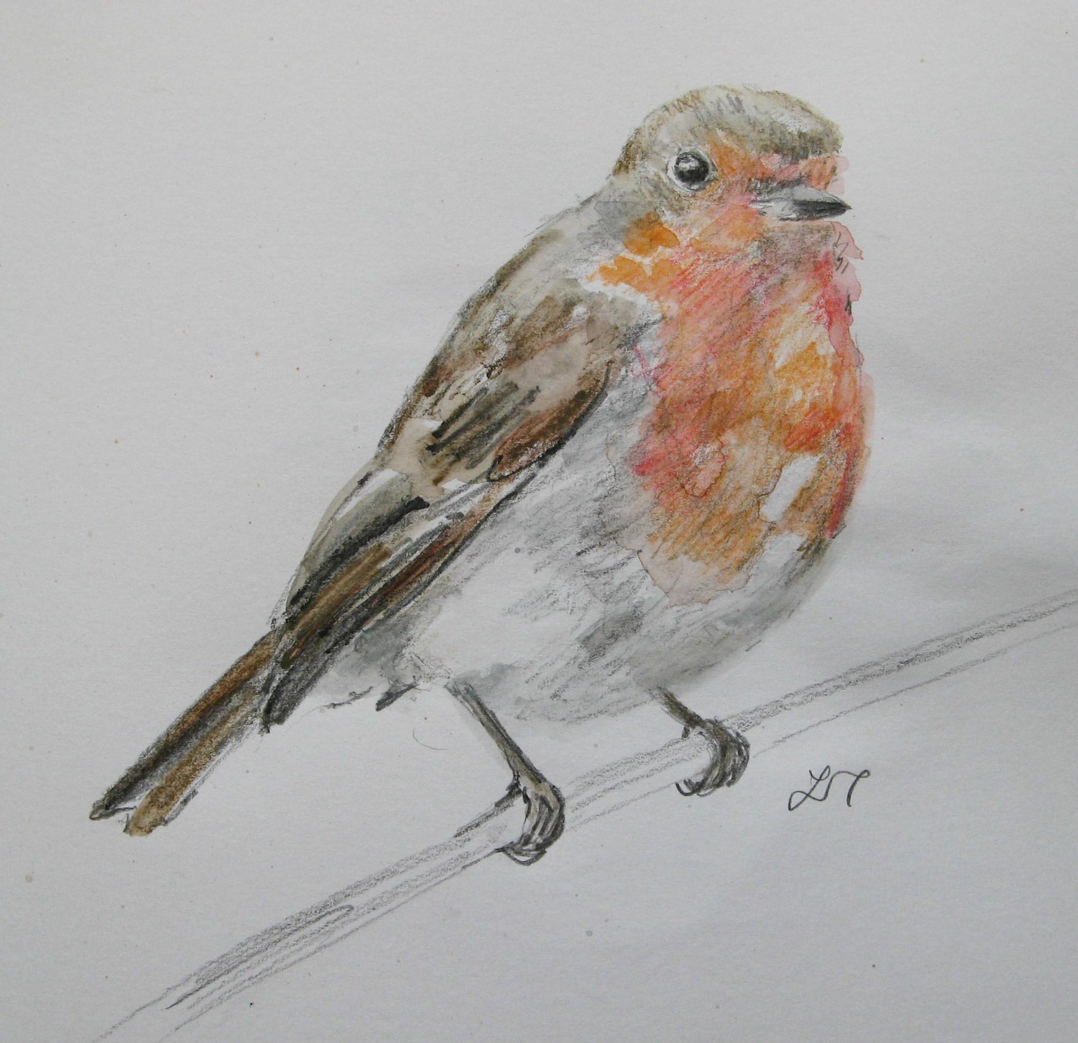 Uncategorized Robin Drawing robin drawings agnesandcora 007