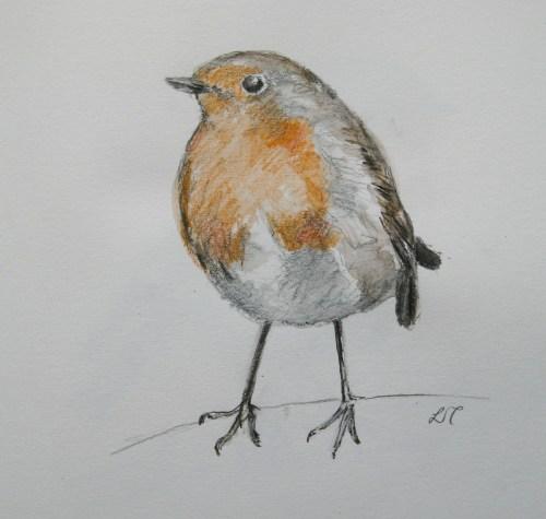 robin drawings 011