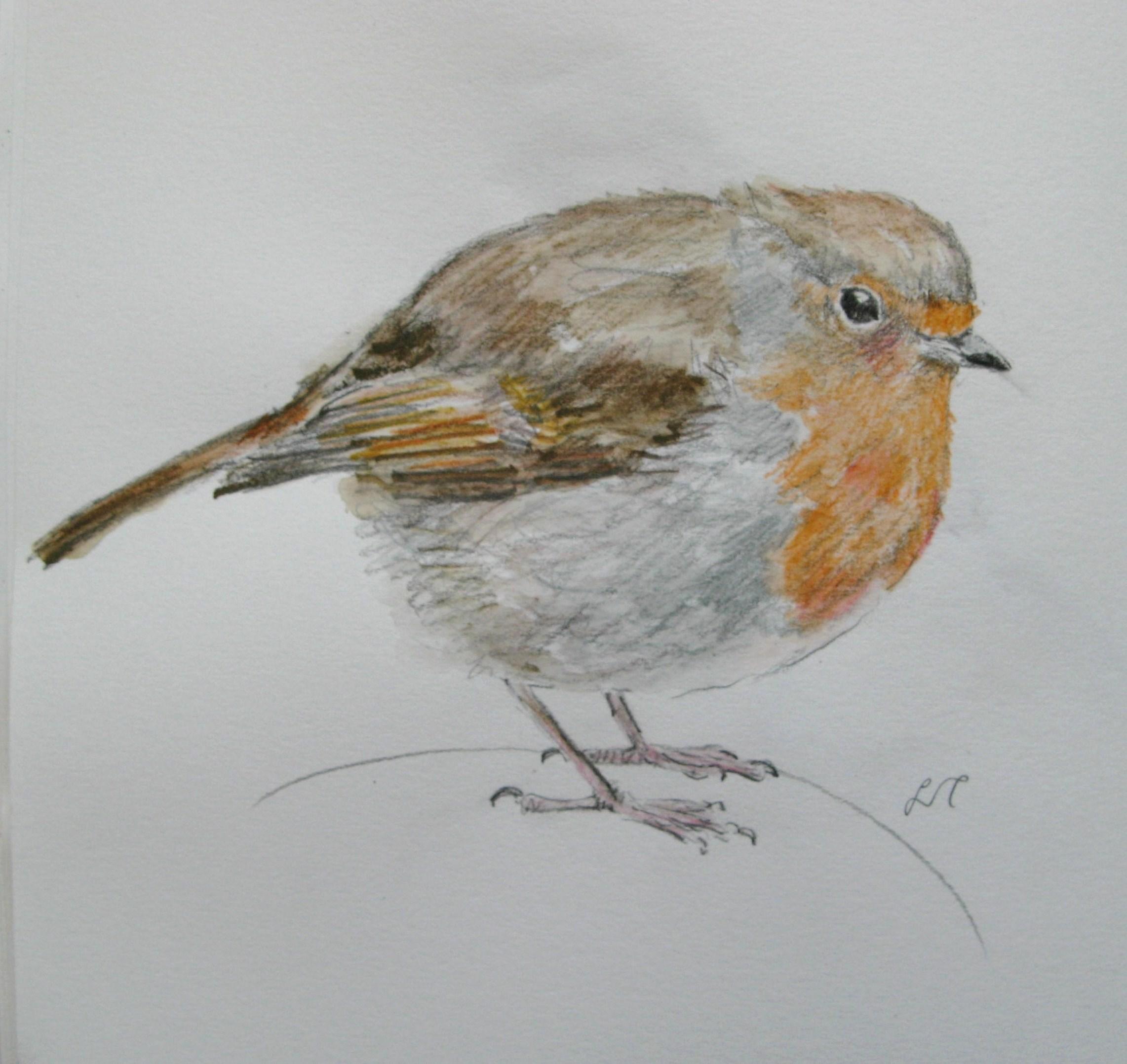 Image Gallery robin drawings