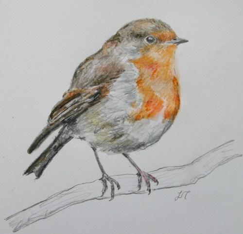 robin drawings 017