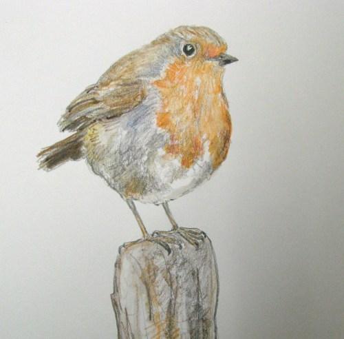 three robin drawings 007