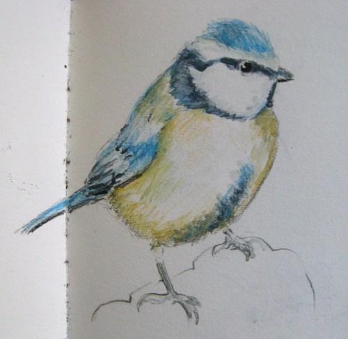 bluetit colours 018