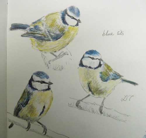 bluetit sketches 088