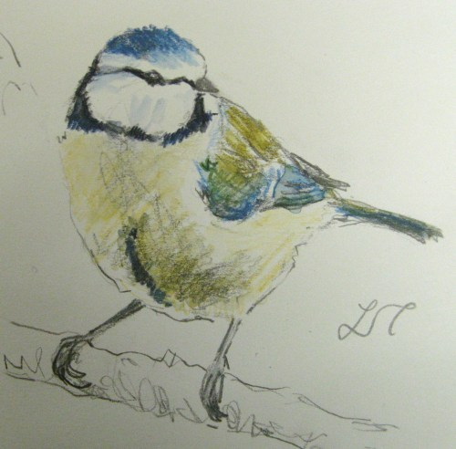 bluetit sketches 092