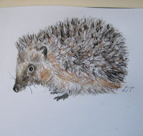 hedgehog drawings 002