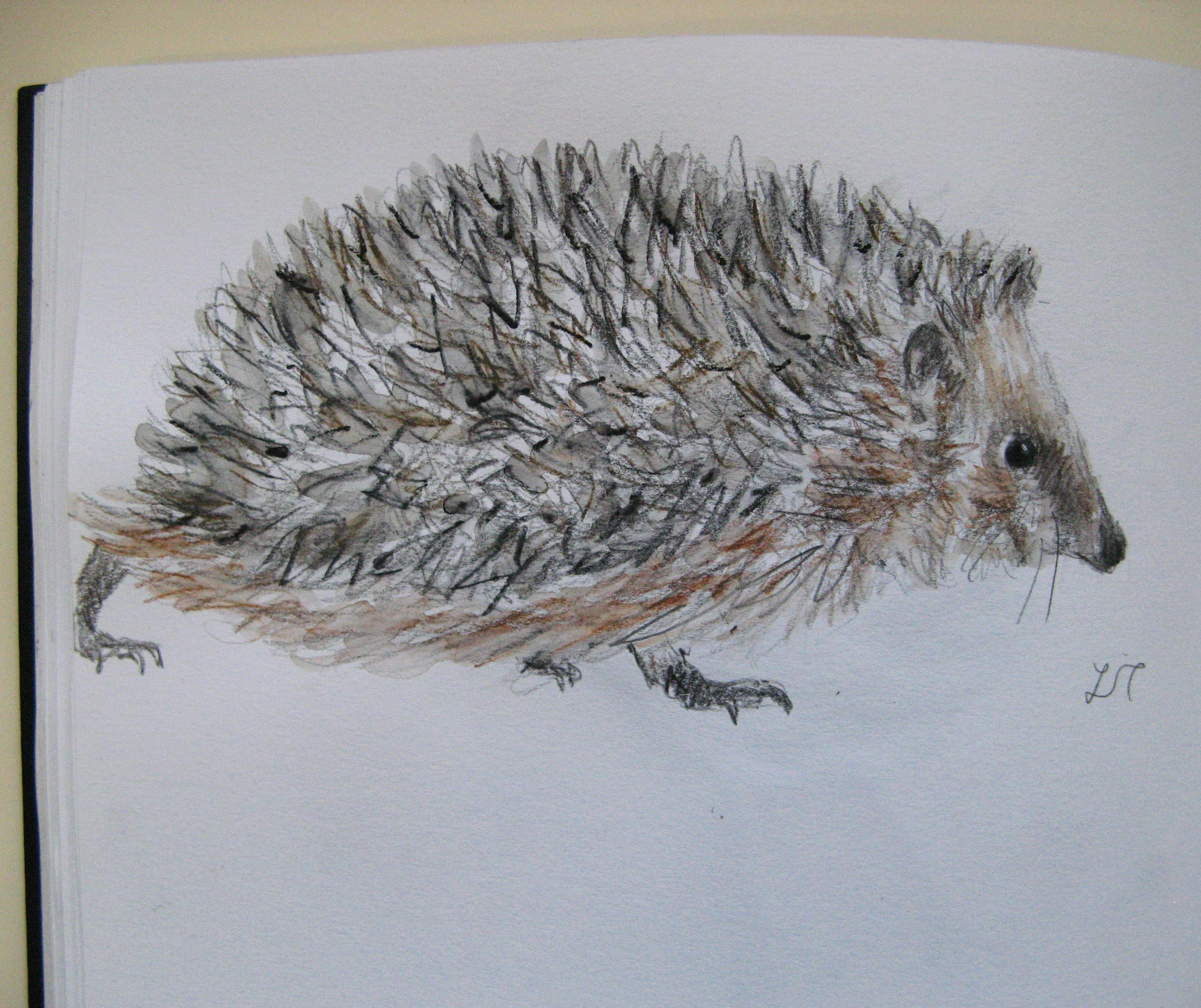 Drawing Hedgehog Sketch Pictures to Pin on Pinterest ...