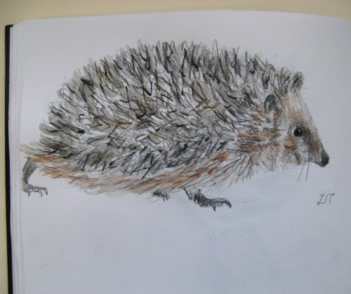 hedgehog drawings 008