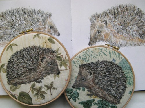 two hedgehogs 054