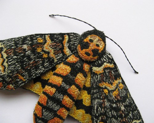 deaths head hawk moth 006