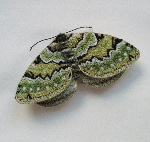 Green Carpet moth 015
