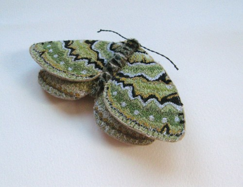 Green Carpet moth 029