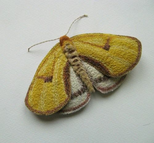 yellow moths 089