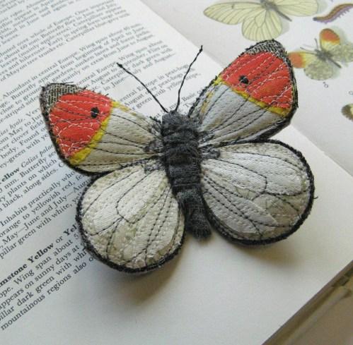 orange tip butterfly 028