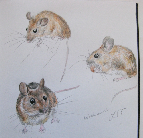 sketchbook woodmice 1