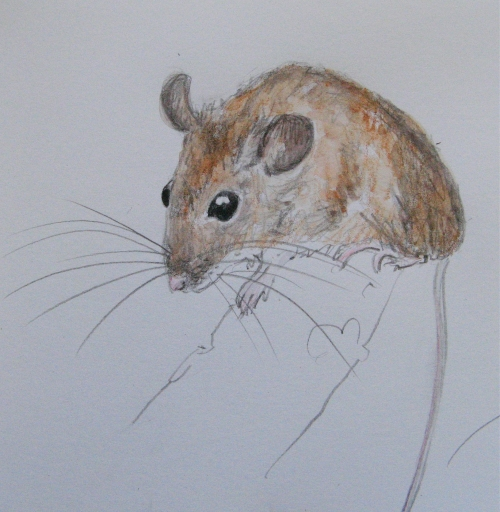 sketchbook woodmice 2