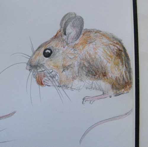 sketchbook woodmice 3