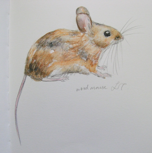 woodmouse 2