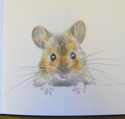 woodmouse drawing 2
